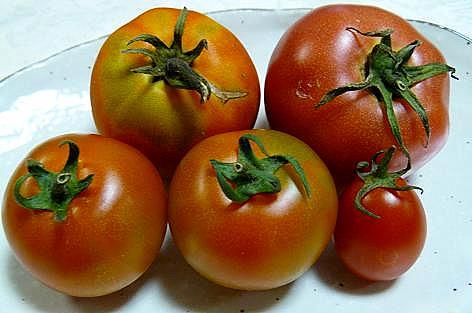 5種類のトマト♪