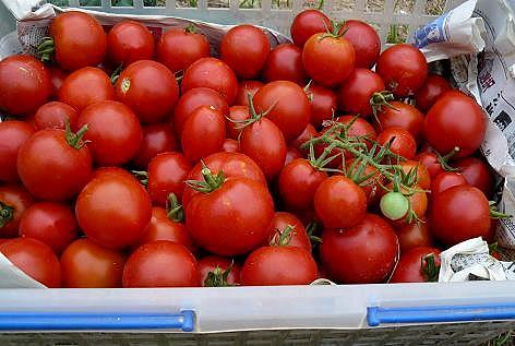 カゴいっぱいのミニトマト♪