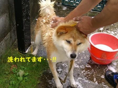 洗われた!!