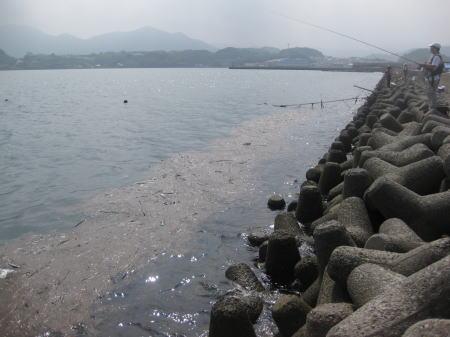 銀鱗功大村湾3