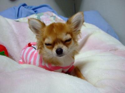 すでに寝そうやしー。