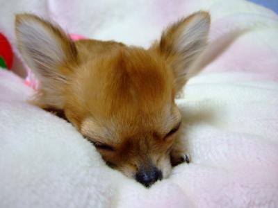 はい寝たー。