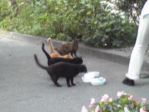 ボランティアのおばさんと猫たち
