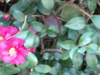 IMGP4459.jpg