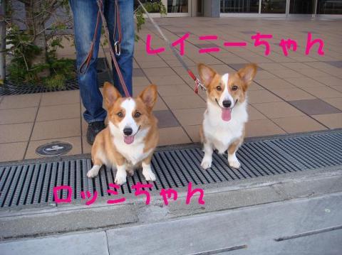 ロッシ&レイニーちゃん