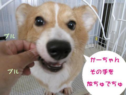 IMG_1607_20090623103335.jpg