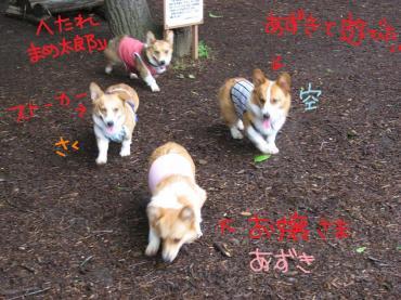 IMG_7347.jpg