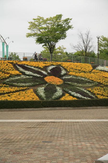 麻溝公園 クレマチス