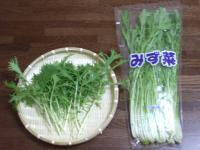 水菜比較1