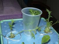 水菜収穫後
