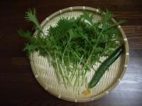 水菜と一緒の初なり