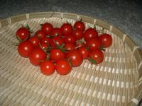 ミニトマトの様子04