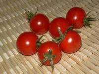 ミニトマトの様子05