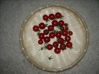 ミニトマトの収穫01