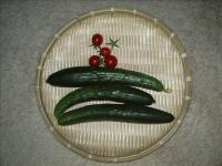 きゅうりの収穫01