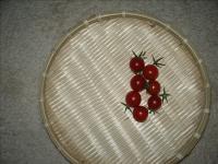 ミニトマト03