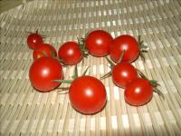 ミニトマト収穫02
