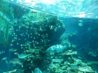 サンゴの海1
