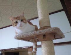チェシャ猫 ボンコ