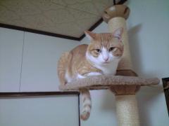 チェシャ猫そっくり