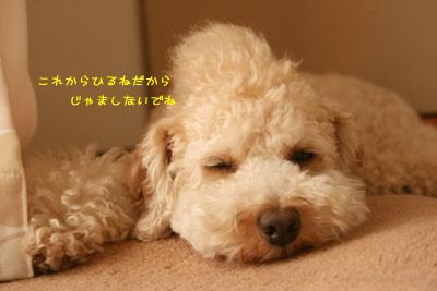 20080808-03.jpg
