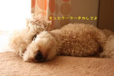 20080813-03.jpg