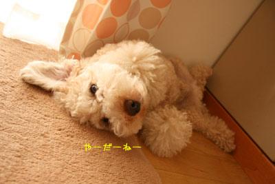 20080813-04.jpg