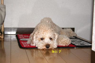 20080828-03.jpg