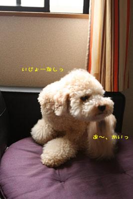 20080901-03.jpg