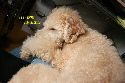 20080901-04.jpg