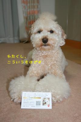 20081029-06.jpg