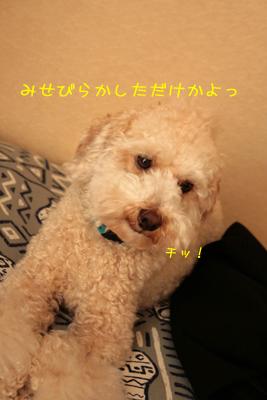 20081105-12.jpg