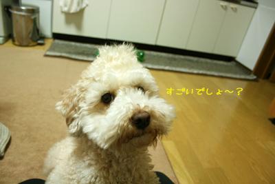 20081112-09.jpg