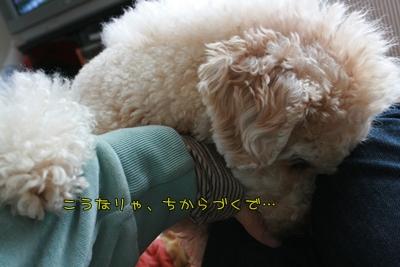 20090113-06.jpg