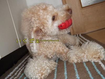 20090331-06.jpg