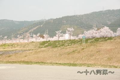 20090413-01.jpg