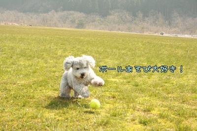 20090413-08.jpg