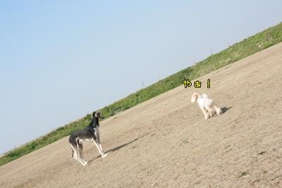 20090422-12.jpg