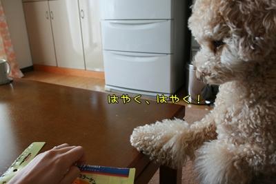 20090601-04.jpg
