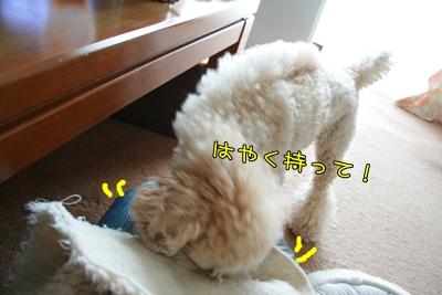 20090617-05.jpg
