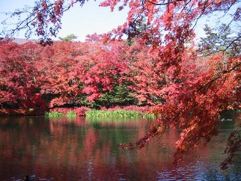 雲場池の紅葉①