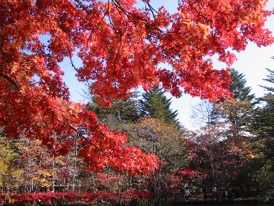 雲場池の紅葉②