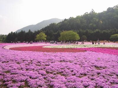 富士桜まつりの風景①