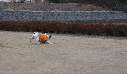 散歩-20080122-11