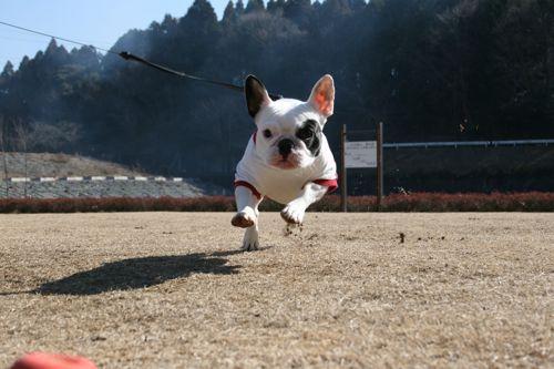 散歩-20080127-1