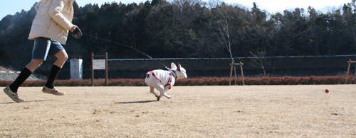 散歩-20080127-5