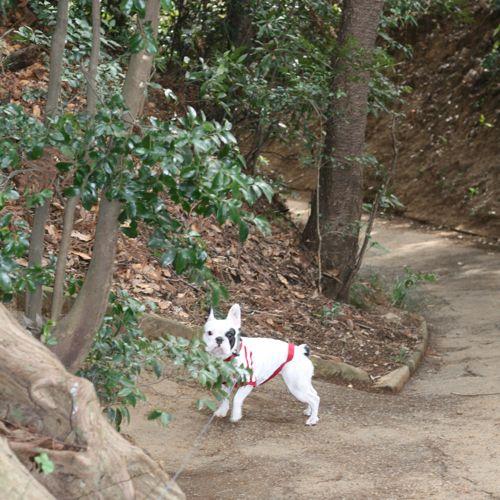 散歩-20080131-1