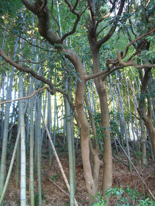 風景-20080213-1