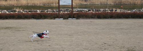 散歩-20080223-1