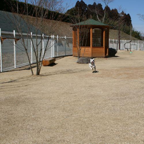 ドッグラン-20080306-4